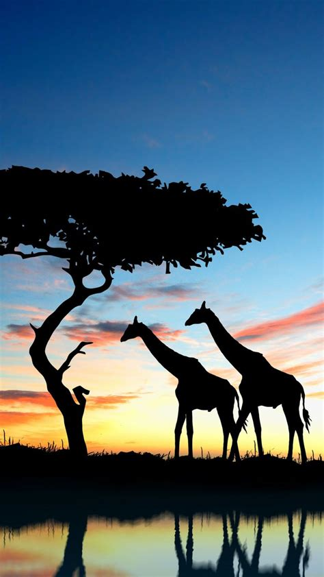 wallpapers silhouette sky grassland world vacation