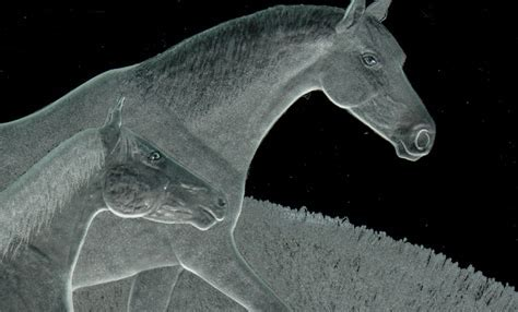Etched Glass Vessel Sink   Horses   Sinks Gallery