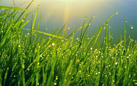 Growing Green how to grow a greener lawn and become the envy of all