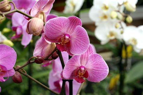 orchid types