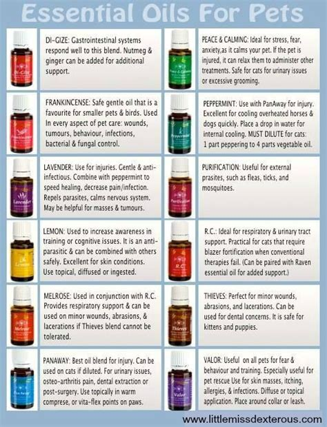 essential oils for dogs living essential oils for pets miss dexterous
