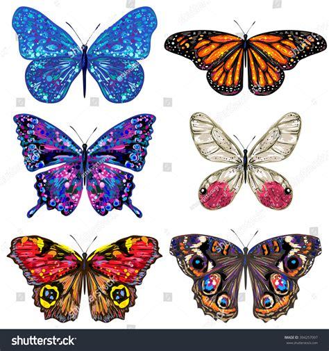 Butterfly Set butterfly set vector colorful butterflies butterflies
