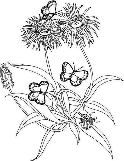 rainforest butterfly coloring pages jungle flower colouring pages