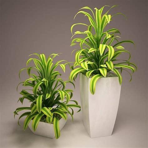 vasi ornamentali da interno produzione piante tecniche di giardinaggio