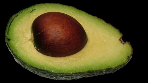 are avocados poisonous to dogs are avocado pits poisonous reference
