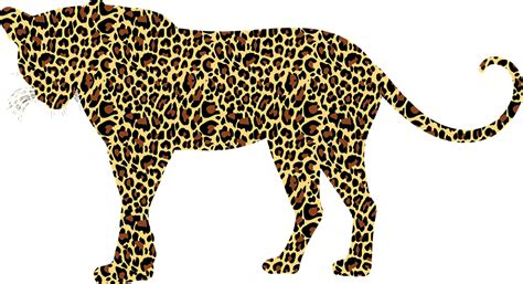 domain leopard image the graphics free vector graphic leopard big cat feline animal