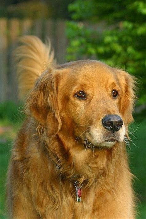 top 5 smartest dogs dogs and cats top 5 smartest breeds