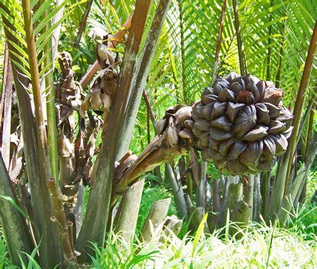 Tikar Rotan Aceh kajian tempatan tahun 5 october 2012