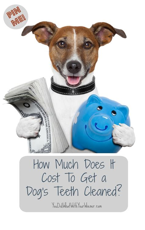 puppy vet visit cost how much does it cost to get a s teeth cleaned