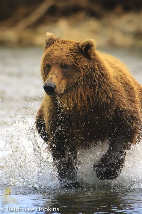 6 tips on wildlife photography with national geographic