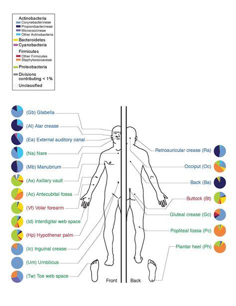 human microbiota wikipedia