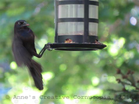 anne s creative cornucopia black birds grackles