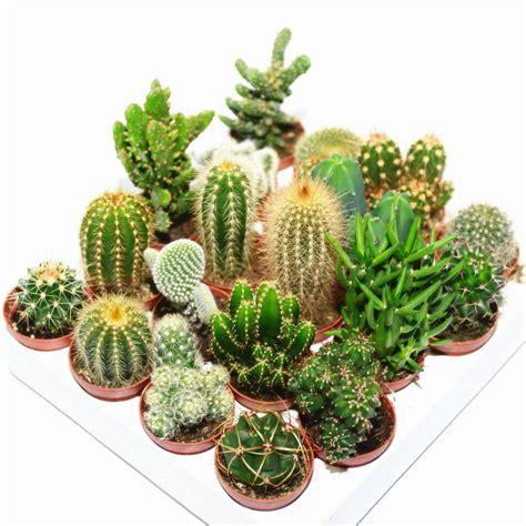 Eco Friendly House Ideas glass cube cactus terrarium by dingading terrariums