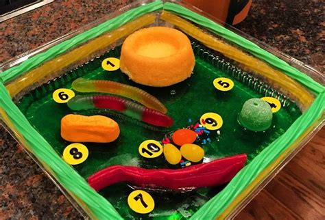Make A 3d Model Of A Plant Cell