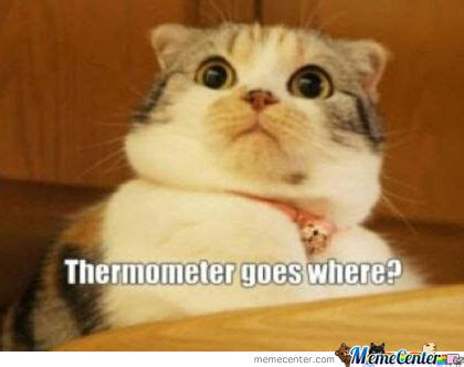 Scared Cat Meme - afraid cat is afraid by poleris meme center