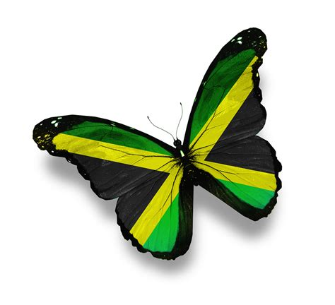 jamaican flag butterfly isolated on white mike gerrard
