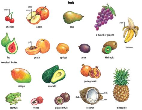 fruits with seeds pit 1 noun definition pictures pronunciation and usage