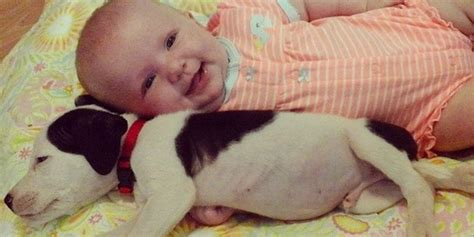 puppy with baby baby pit bull puppy are cutest best friends you ll see today