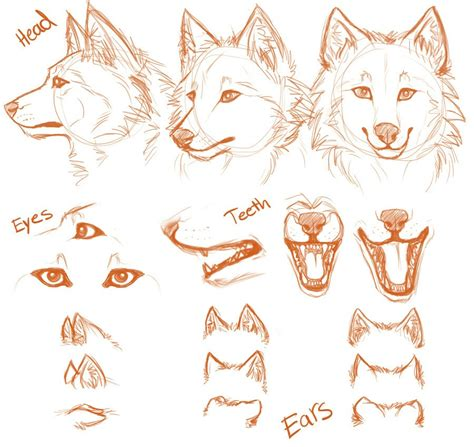 werewolf head tutorial simple wolf head and positions drawing stuff pinterest