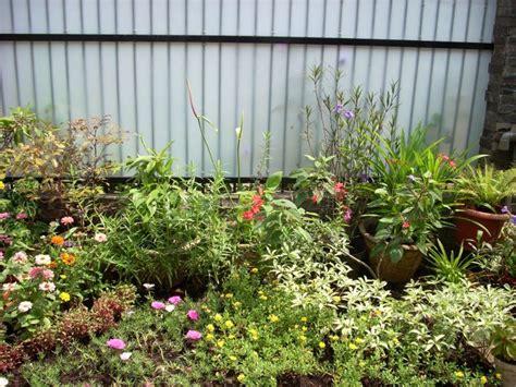 Pupuk Untuk Bunga Taman cara menanam bunga anggrek agar cepat berbunga tanamanbaru