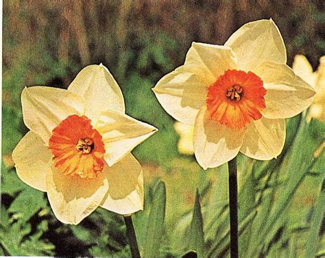 elenco di fiori tipi di fiori elenco tutti tipi di fiori gpsreviewspot