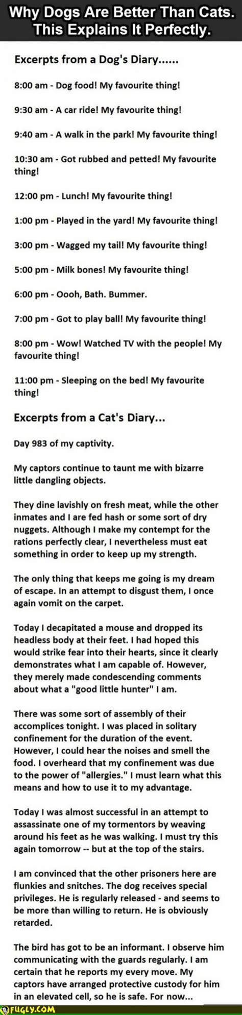 cat vs diary cat diary vs diary