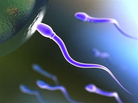 Boleh Ga Hamil Muda Berhubungan Intim Efek Negatif Sperma Untuk Ibu Hamil