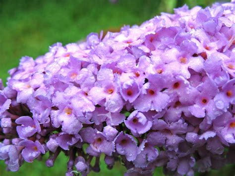 flowering shrubs that bloom all summer summer flower summer flowering bushes