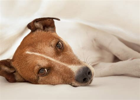 can dogs catch colds your can dogs catch colds health and care care and advice