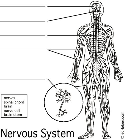 anatomy coloring book nervous system name