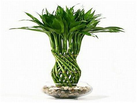 good house plants wallpaper for home interiors