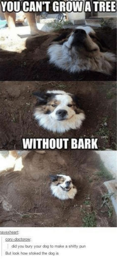 can you bury your dog 25 best memes about dogs dogs memes