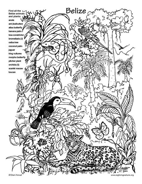 printable rainforest animal pictures dschungel dschungel pinterest dschungel brasilien