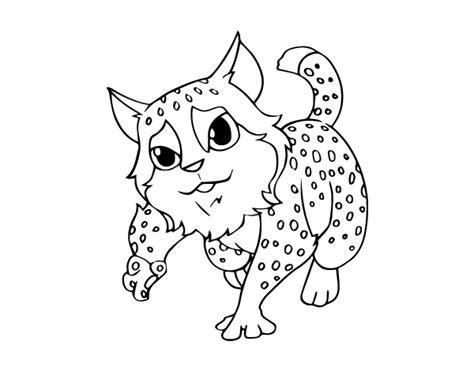 wildcat coloring page coloringcrewcom