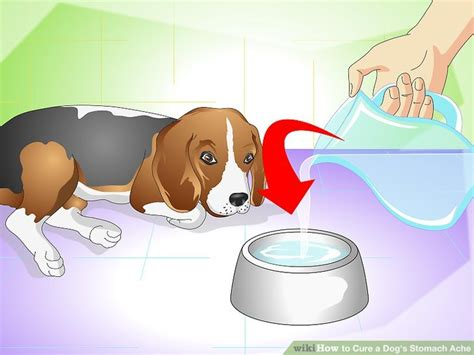anti nausea for dogs home remedies for your dogs nausea maple suyrup diet