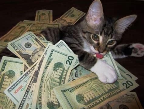 Rich Cat Meme - cat cats money masterpost gato treat yo self funny cats