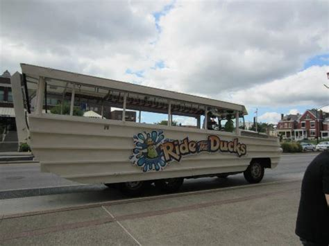 duck boat rides newport ky petting crabs picture of newport aquarium newport
