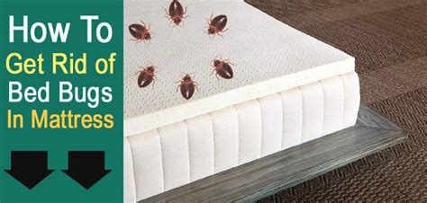 how to rid of bed bugs best mattresses reviews 2017 ultimate buying guide