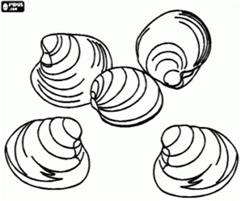 open clam coloring coloring pages