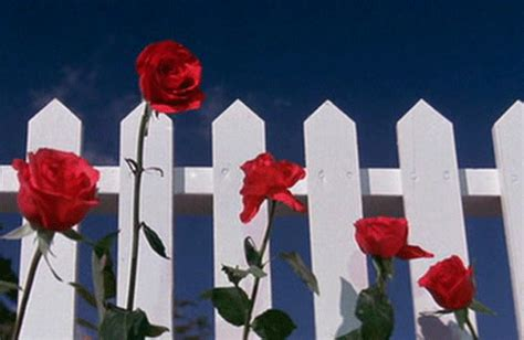 david creates a sunny red and white vintage kitchen for red flowers gifs find share on giphy