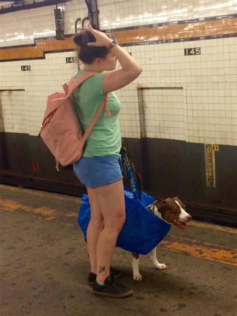 dogs on nyc subway behold the large in a small bag photo in the new york city subway viewing nyc