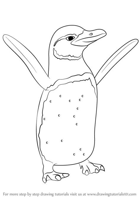 galapagos penguin coloring page learn how to draw a galapagos penguin antarctic animals