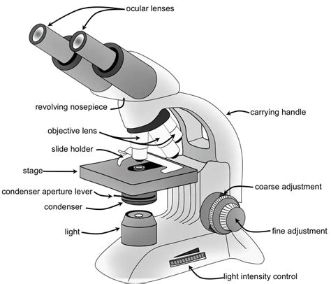 what is a compound light microscope light optical or compound microscope lab information