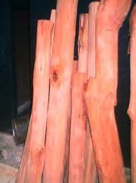 manfaat  khasiat kayu secang