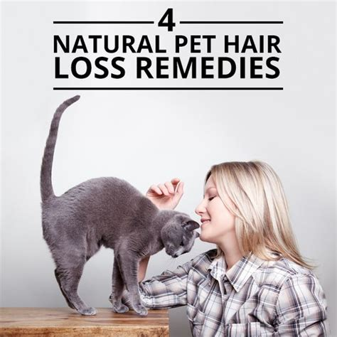 home remedys for dogs losing hair coats natural and pets on pinterest