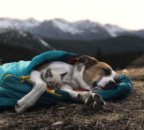 colorado puppy henry the colorado and adventure cat baloo insiders