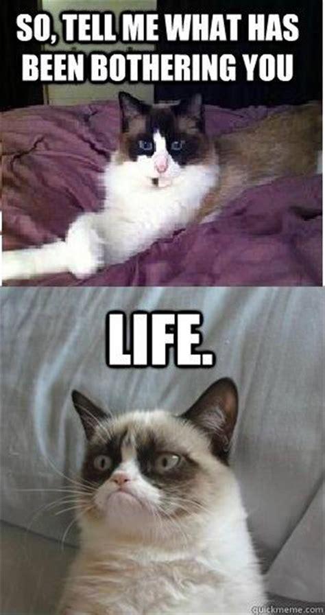 Grumpy Cat Friday Meme - funny pictures 34 pics