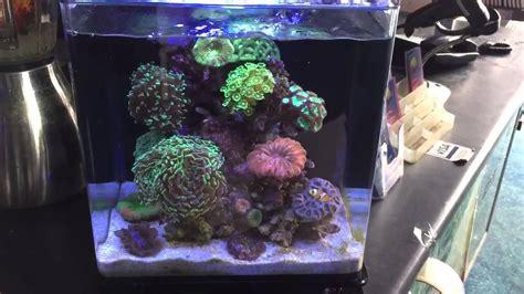 The best nano reef aquarium ever!   YouTube