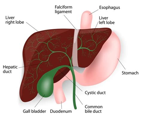 what color is bile signs and symptoms of bile duct cancer