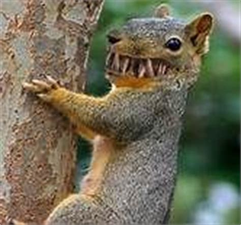bing pictures as wallpaper squirrel funny squirrel bing images sagalouts lot pinterest